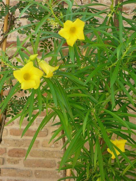 Mediterrane Kübelpflanzen Winterhart by Mediterrane K 252 Belpflanzen Holen Sie Sich Den Sommer Nach