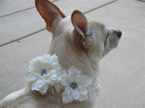Wedding Accessories For Dogs : Yellow Green Wedding Flowers Pets At Weddings Floral Dog
