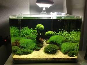 Aquarium Einrichten 60l : aquarium von apistofan becken 27280 ~ Michelbontemps.com Haus und Dekorationen