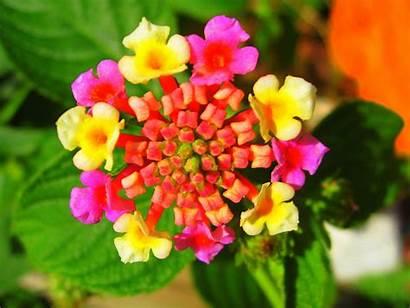 Flowers Exotic Flower Rare Colorful Unique Plant
