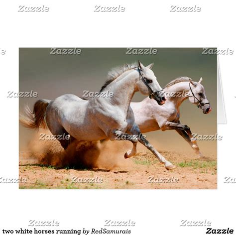horses running zazzle two horse most