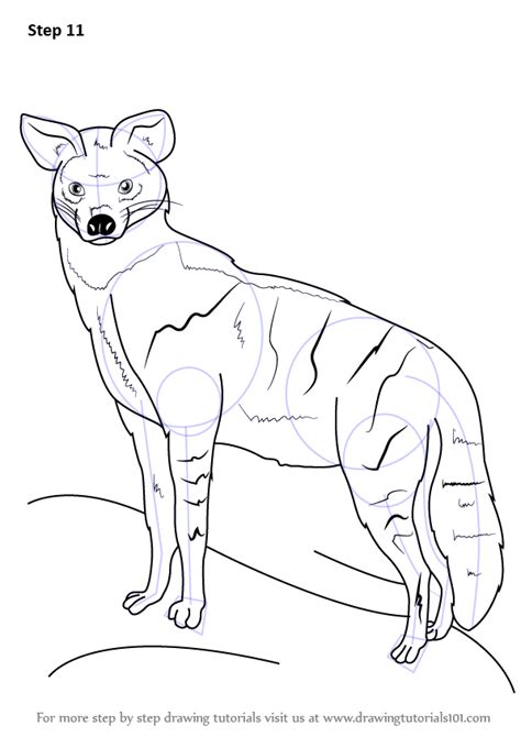 step  step   draw  aardwolf drawingtutorialscom