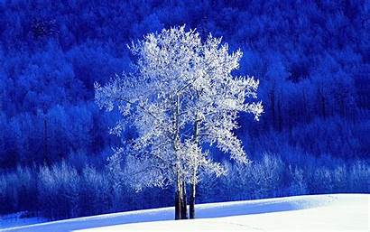Tree Aspen Frosted Wallpapers 1920 1200 Trees