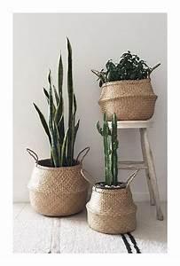 Panier Osier Plante : 5 mani res de sublimer les cactus dans votre int rieur depuis mon hamac ~ Teatrodelosmanantiales.com Idées de Décoration