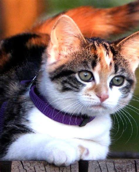10694 Best Best Cute Kitties Love Video Images On