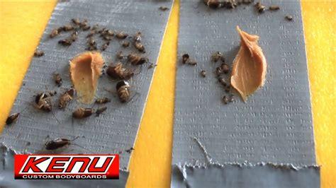 kill da roach duct tape trap extermination youtube
