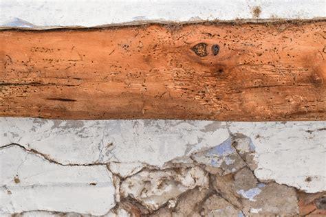 Holzwurm Im Balken by Holzwurm Im Fachwerk 187 Was K 246 Nnen Sie Tun