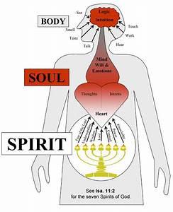 Biblical Body Soul And Spirit
