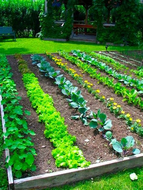 a organized and beautiful vegetable garden