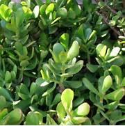 plante grasse d 39 int rieur liste ooreka - Les Plantes Grasses D Exterieur