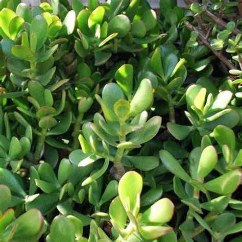 plante grasse d int 233 rieur liste ooreka