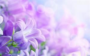 Purple, Flower, Backgrounds