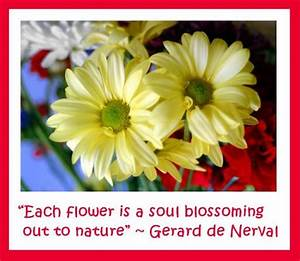 Quotes And Sayings About Flowers. QuotesGram