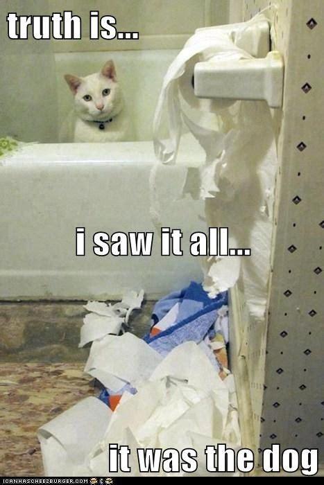 Bad Kitty Meme - truth on funnyand com