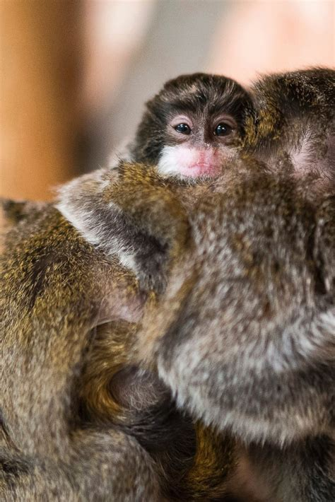 picture cutest baby animals    world abc news