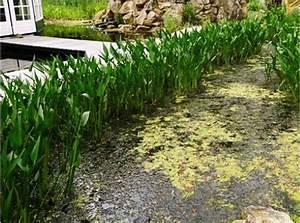 Wasserpflanzen Teich Kaufen : wasserpflanzen im filtergraben gartenteich planung bau ~ Michelbontemps.com Haus und Dekorationen