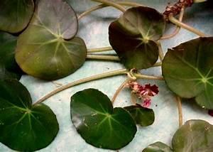 Bouture Plante Verte : la plante verte de m m tods2tods ~ Melissatoandfro.com Idées de Décoration