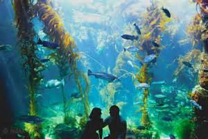 image gallery scripps aquarium