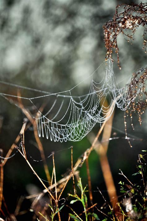 composition toile d araignee les 47 meilleures images 224 propos de toile d araignee sur