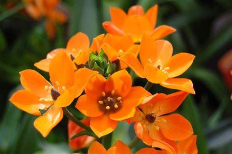 Zimmerpflanze Orange Blüte by Bild 19 Aus Beitrag Bl 252 Tensinfonie