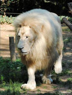 Lodge Zoo La Fleche 848 b 233 r 233 mes zoo prefer 233 animals