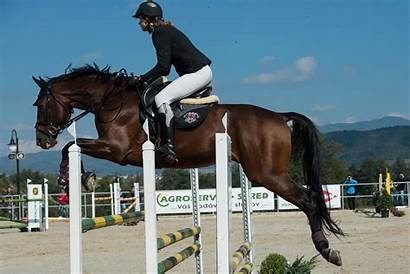 Horse Jumping Racing Jump Obstacles Across Animal