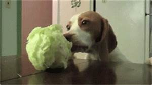 Funny Dog Locos GIF - Find & Share on GIPHY