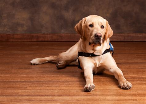 Is bamboo flooring good for dogs?   Bamboo Flooring Blog