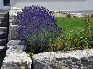 Baum Vorgarten Immergrün : steingartenpflanzen ~ Michelbontemps.com Haus und Dekorationen