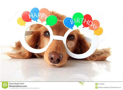 Happy Birthday dog stock image. Image of accessory ...