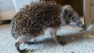 Bilder Von Igel : igel gefunden wildtierhilfe wien ~ Orissabook.com Haus und Dekorationen