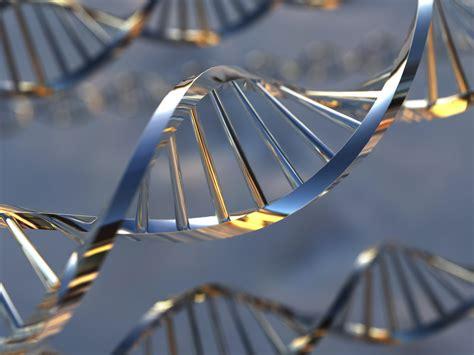 Découvrez l'Offre génomique du HBC - Herd Book Charolais