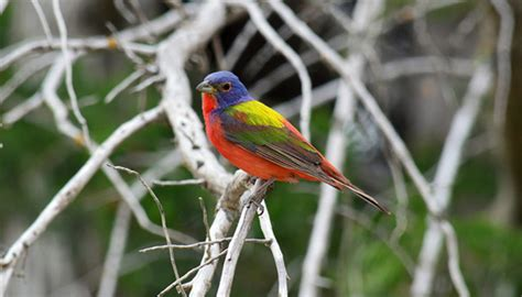 pictures of birds in the hill country of texas 7 great places for birding in the hill country hill country