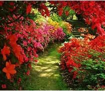 beautiful flower garde...