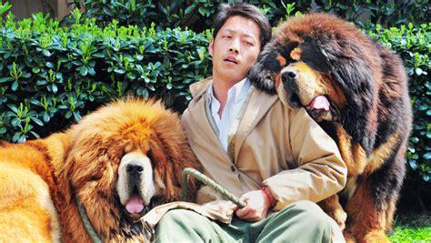 canap le plus cher du monde le chien le plus cher du monde coûte 1 4 million d 39 euros