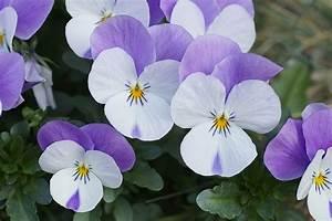 Blumen Für Schattige Plätze : blumen f r den schattengarten ~ Michelbontemps.com Haus und Dekorationen