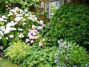 Welche Pflanzen Passen Gut Zu Hortensien : bildergebnis f r beetgestaltung mit hortensien garten ~ Lizthompson.info Haus und Dekorationen