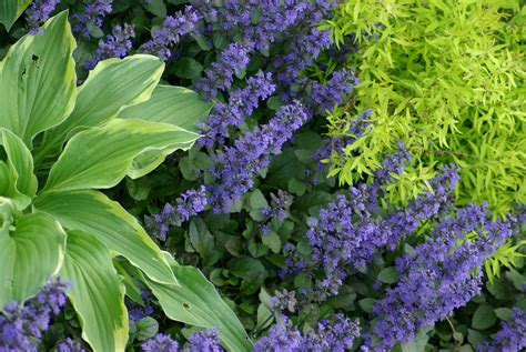 total shade plants full shade loving plants bing images