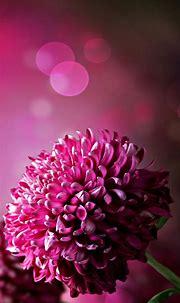 Purple Flowers Wallpaper For Phone   2021 Cute Wallpapers