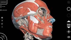 Anatomy App - 3d Atlas Of Anatomy - Muscular System