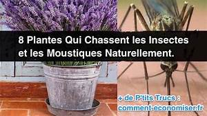 Comment Chasser Les Mouches : 8 plantes qui chassent les insectes et les moustiques ~ Melissatoandfro.com Idées de Décoration