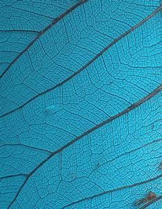 Stock Texture - Leaf Veins III by rockgem on DeviantArt