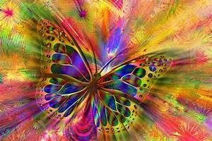 Arrangement Butterfly Aesthetics  U00b7 Free Image On Pixabay