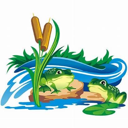 Frog Transparent Background Clipart Animal Pond Cartoon