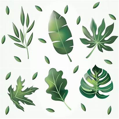Leaves Clipart Vector Pack Graphics Vectors