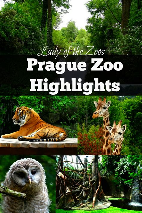 Prague Zoo Highlights Lady Of The Zoos