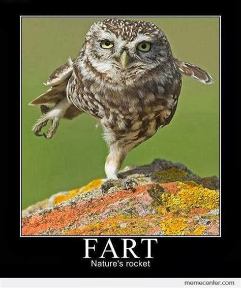 Owl Birthday Meme - 16 funny owl memes for fum and interesting articles feafum