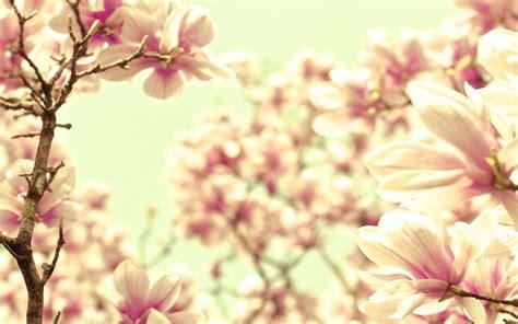 vintage flowers wallpapers weneedfun