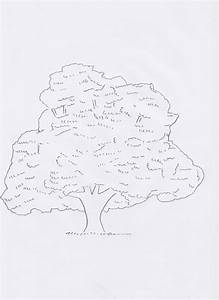 How To Draw A Sycamore Tree  Step