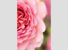 Heather Edwards Garden Photographer's Association